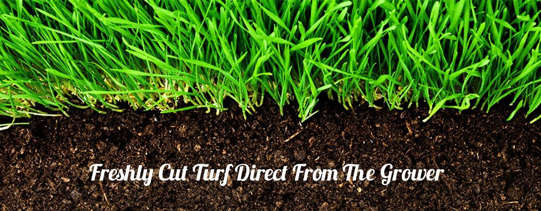 Lawn Turf Suppliers